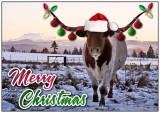 christmaslonghorn1.jpg