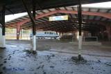 Open Class Livestock
