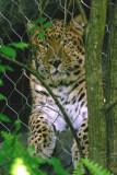 Central Florida Zoo 08