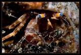 Hermet crab - a little closer