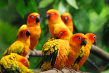 Singapore Jurong Bird Park