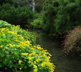A stream of yellow and green