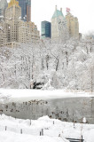 Snow and birds in Central Park, NY