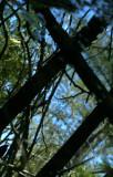 X Reflection trees.jpg