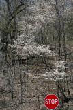 s_blossom.jpg