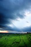 under a trembling sky