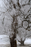 Crystal Tree (2)