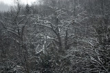 Snow Painted Trees (5)
