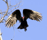 Vultures Can Be Pretty?