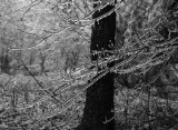 storm of ice.jpg