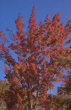 New Hampshire Autumn Morning