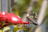 1a hummingbird