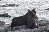 2 Seals