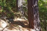4a May 2010 - walking tracks
