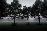 3.5 trees
