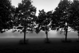 trees and morning mist