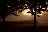 Morning walks, Gelderse Hout