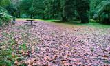 Damp Autumn Days at the Park