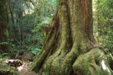 21 Oct 07 - Tree Root
