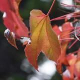 Autumn 08 arrives