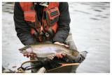 October 21, 2007 ---  Crowsnest River and Burmis Lake, Alberta