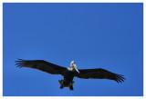 December 7, 2007 --- Ascension Bay, Mexico