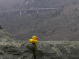 Lucky with the Linn Cove Viaduct in the background.
