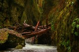 Oneonta Creek Gorge, OR