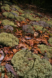 Kentucky Corrals Moss carpet