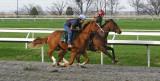 Keenland Lexington, KY morning race warm ups.