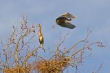 Heron rookery on Elkhorn creek, KY
