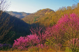 Spring in Perry County. KY