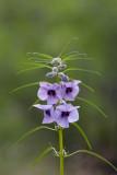 Flower Namibia