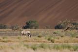 Oryx in Desert Habitat