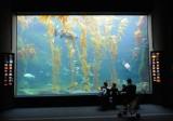 At the Birch Aquarium