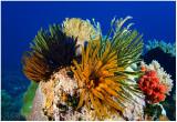 Underwater Bali, 2008