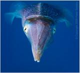 Squid (again).