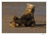 Bear play_