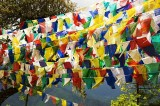 Prayer flags on the hike to Tigers Nest