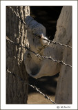 Barbed wire_573c