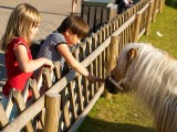 2008-08-19 Sandra Nicole and Horse