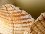 2009-03-31 Shells