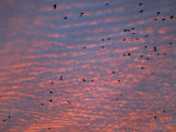 Afternoon sky with birds