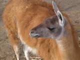 2008-03-26 Lama