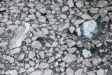 LeConte Glacier:  'Bergie Bits' From Calving Glacier  (Stikine042809--_324.jpg)