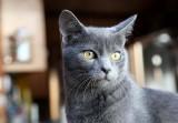 Mr. Handsome Tufa Kitten