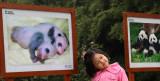 Portraits, Panda Breeding & Research Center  (card3x2-040410-7adj.jpg)