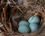 Bird Nest for 2009