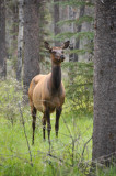 Day 11, Jasper National Park Area, Mt. Robson Provincial Park
