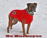 Go Buckeyes!!!  Beat the Ducks!!